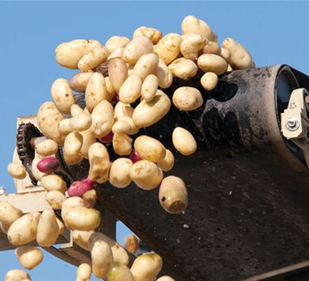 A well-known manufacturer of potato-based snacks and other food and beverage products were experiencing problems with process of cooking potatoes in their factory.